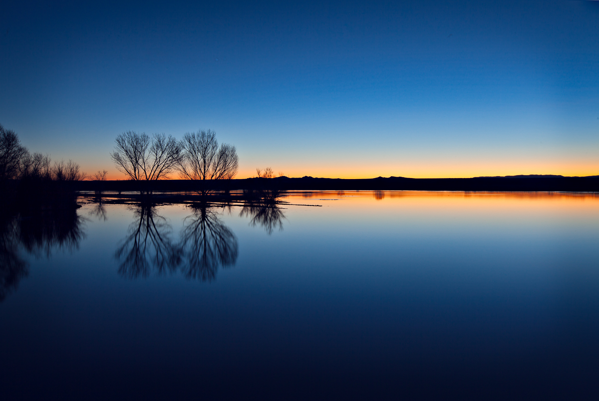Bosque del Apache,New Mexico, photo