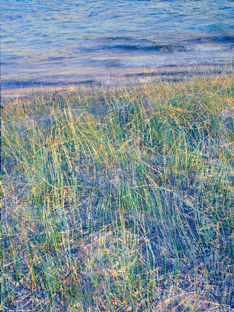 The June 2021 print of the month follows the same vein as the previous three months' prints. Here I stumbled upon some reeds...
